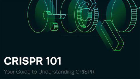 Your Guide to Understanding CRISPR