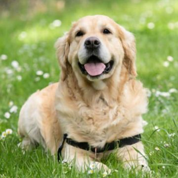 How Old Is Your Dog in Human Years? A New Method for Calculating