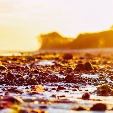 Accelerated Discovery of Bioactive Components in Seaweed