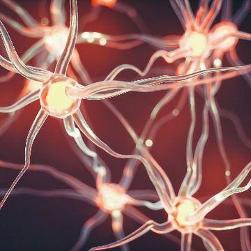 Microglia Devour Neuronal Sheaths To Prune the Developing Brain