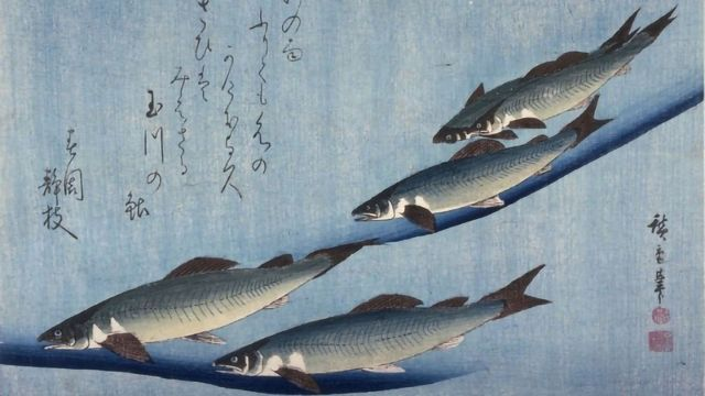 Fishing for a Theory of Emergent Behavior