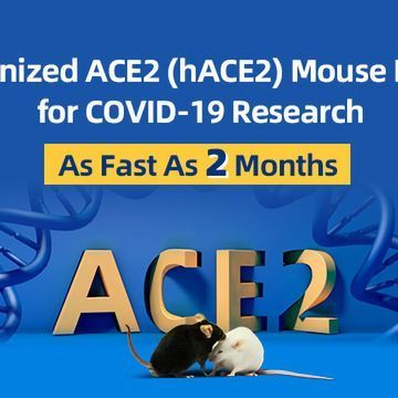 ACE2 Mouse Models for Studying COVID-19 Immunology
