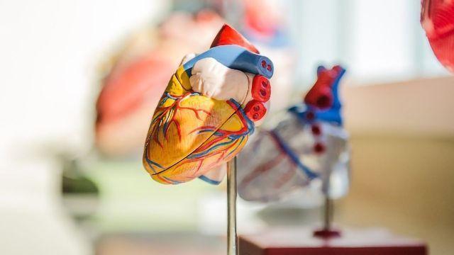 Collagen V Regulates Cardiac Scar Tissue Size