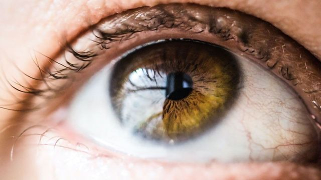 Molecule of Inflammation Also Puts on the Brakes in Autoimmune Eye Disease