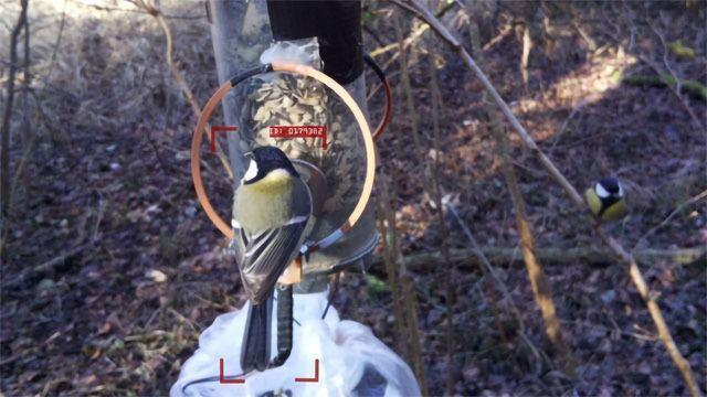 AI Tool Identifies Individual Birds