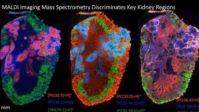 Visualizing Biological Processes With Elizabeth Neumann