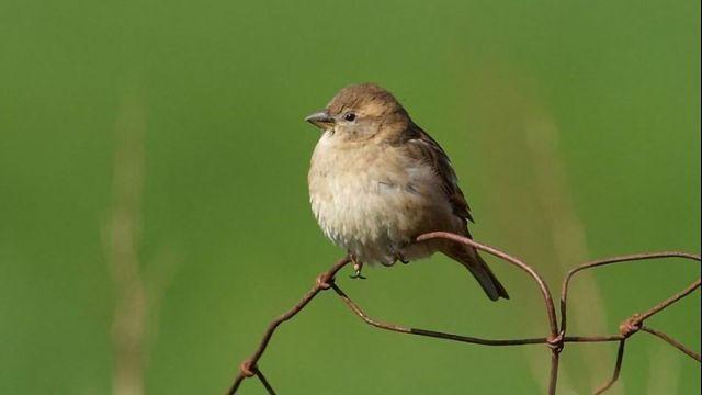 Inbreeding Detrimental for Survival in Birds