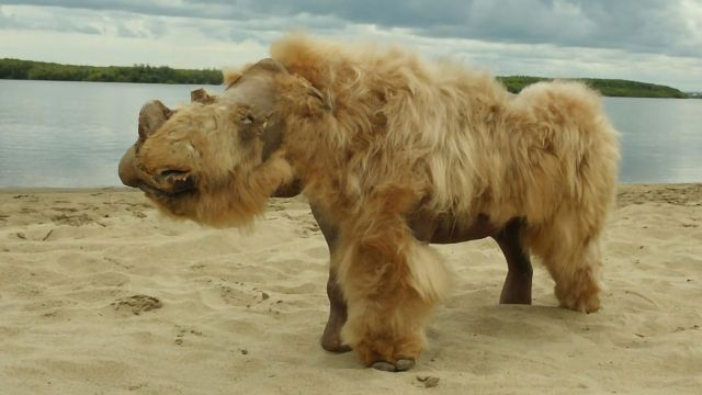 Ancient DNA Suggests Climate Change Behind Woolly Rhino Extinction - Technology Networks