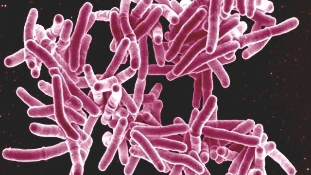 Bishop's Remains Suggest TB Is Much Younger Than Previously Thought