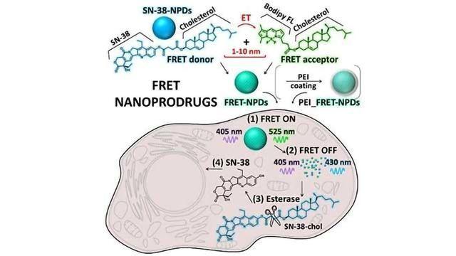 Study Reveals Dynamics of Nanoprodrugs Inside Cancer Cells