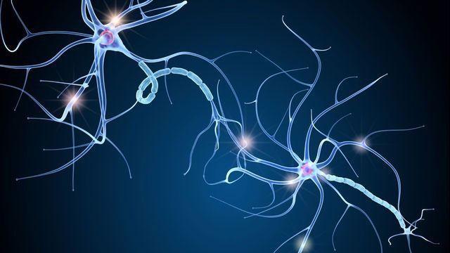 Advances in Cell Line Development for Neurodegenerative Diseases
