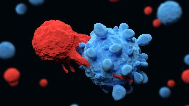 Gut Bacteria Help Our Immune System Attack Cancerous Tumors