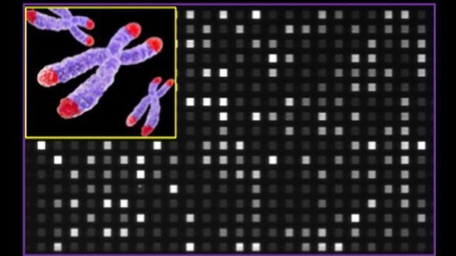 New System To Profile Telomeres in Less Than 3 Hours Developed