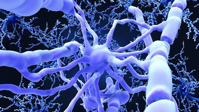 Inflammation-Dampening Antibody Could Be Route To New Alzheimer's Treatment