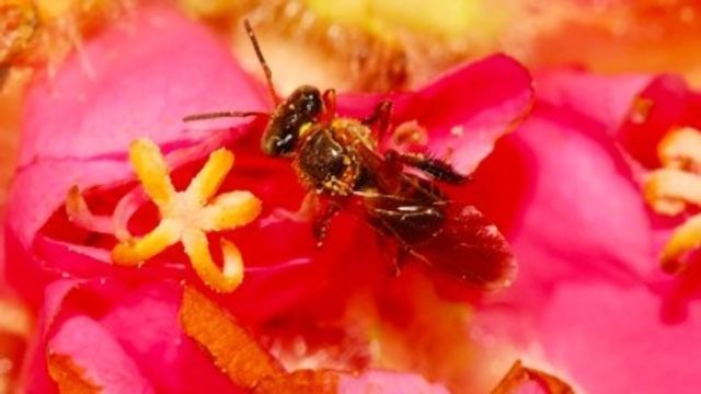 Stingless Bee's Genome Sequenced