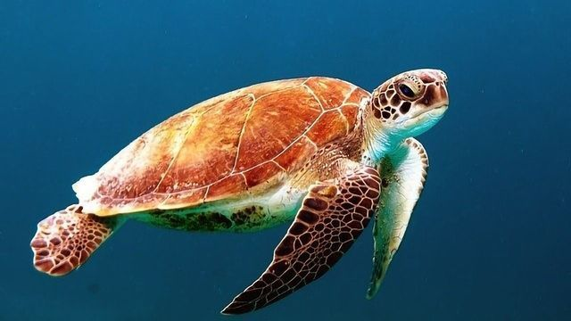 Effects of Plastic on Marine Wildlife Quantified by Novel Method