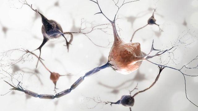 Team Identifies New Drug Candidates for Motor Neuron Disease
