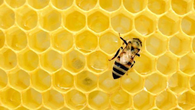 Venom From Honeybee Kills Breast Cancer Cells
