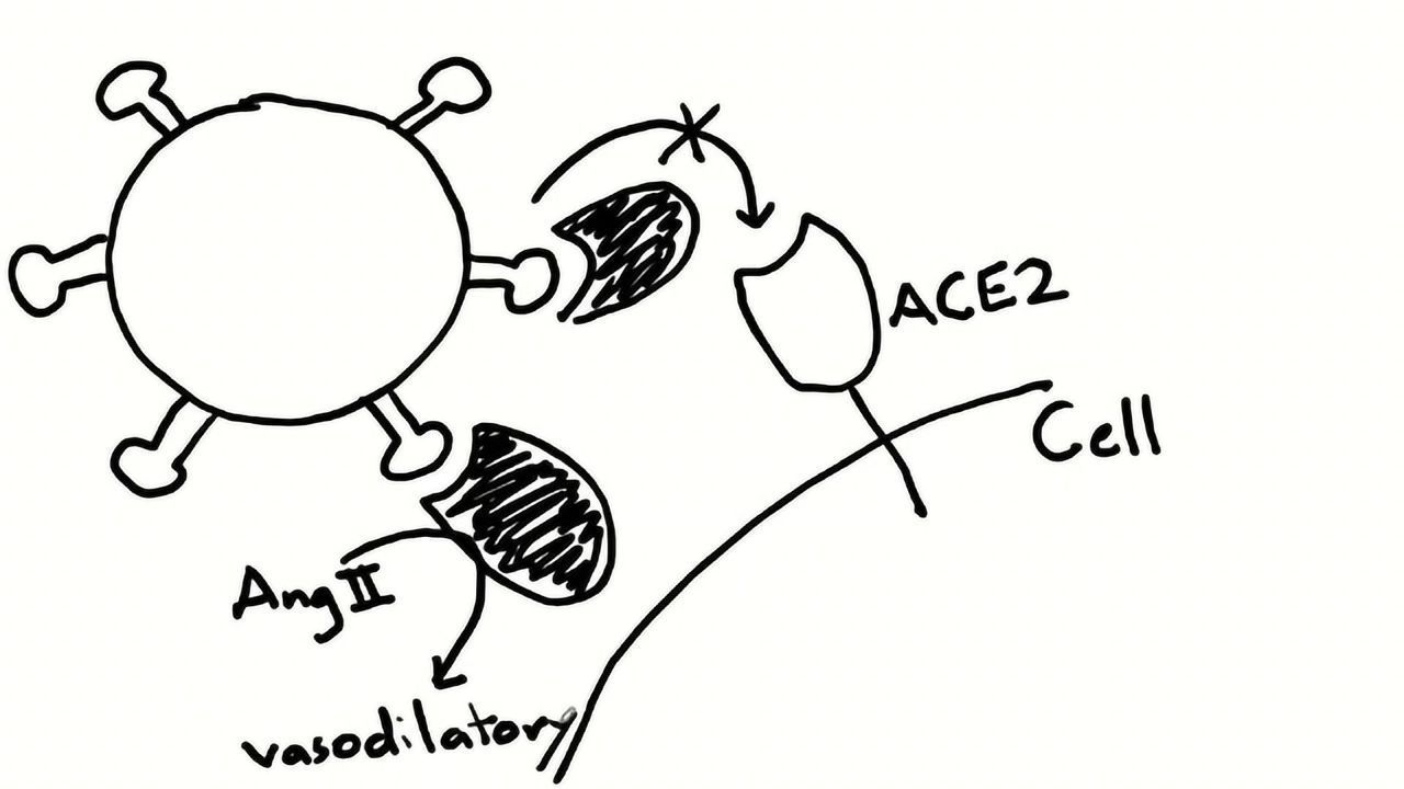 Teach Me in 10 – Engineering a Decoy Receptor for SARS-CoV-2 With Dr Erik Procko, Part I