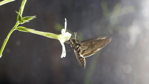 Flower Scent Unattractive to Pollinators in Polluted Air