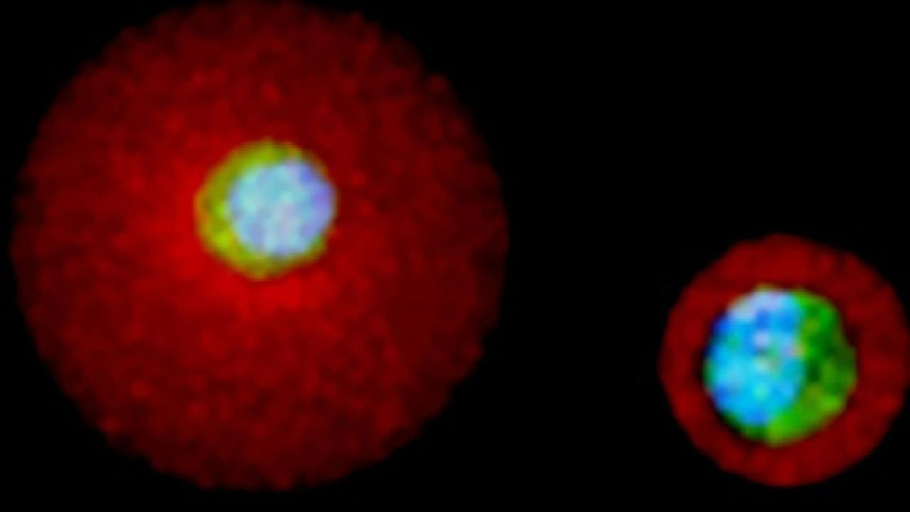 Coaxing Single Stem Cells Into Specialized Cells