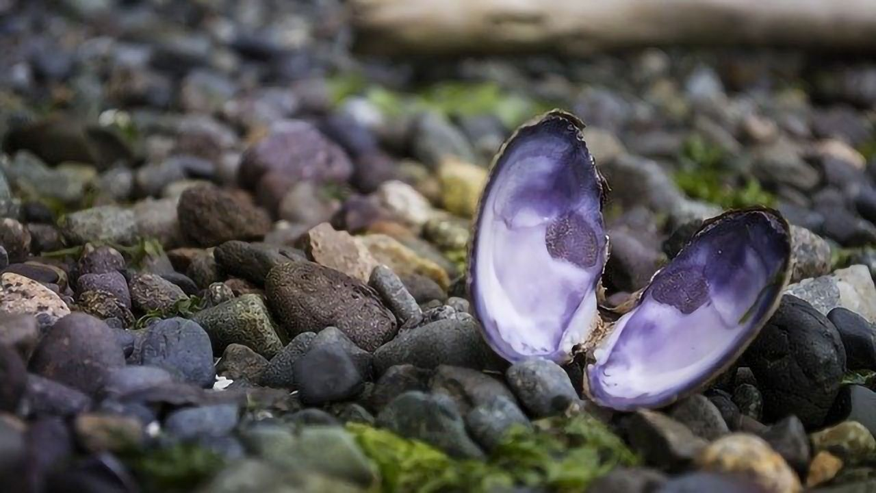 Warming Waters Confuse and Threaten Many Shellfish