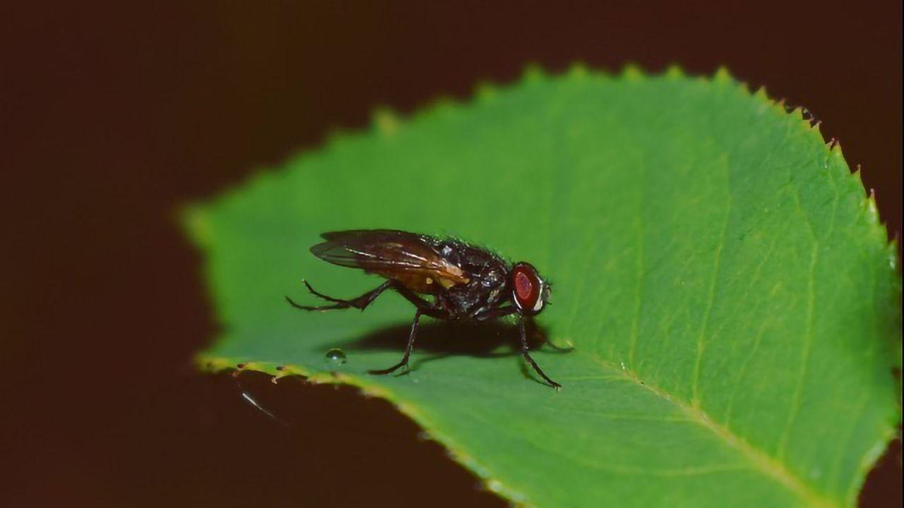 A Genetically-Encoded Birth Control for Pest Organisms
