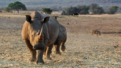 Fighting Poachers With Rhino Prints and Technology