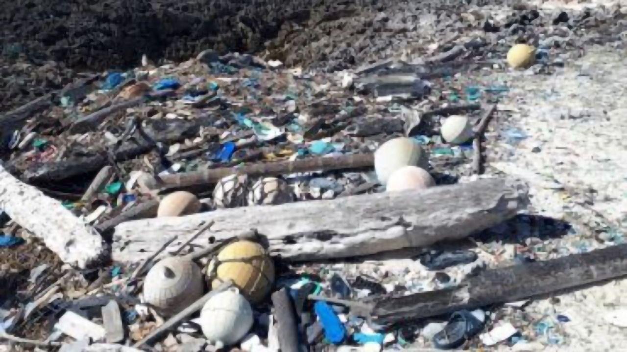 Largest Accumulation of Plastic Waste on Any Single Island