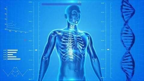 Gut Microbes and Heat Could Hold the Key to Stronger Bones