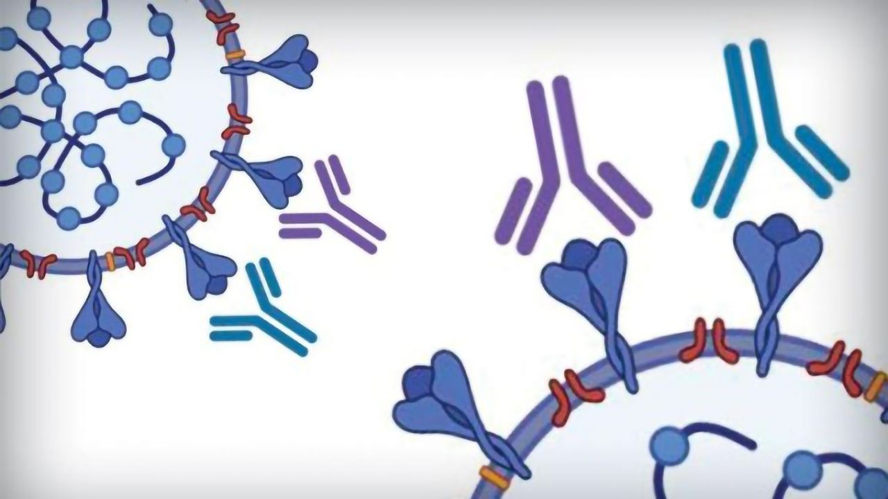 Antibody Test Developed for COVID-19 That Is Sensitive, Specific and Scalable