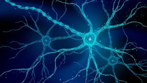 """""""Molecular Bridge"""" Restores Lost Connections in the Mouse Spinal Cord and Brain"""