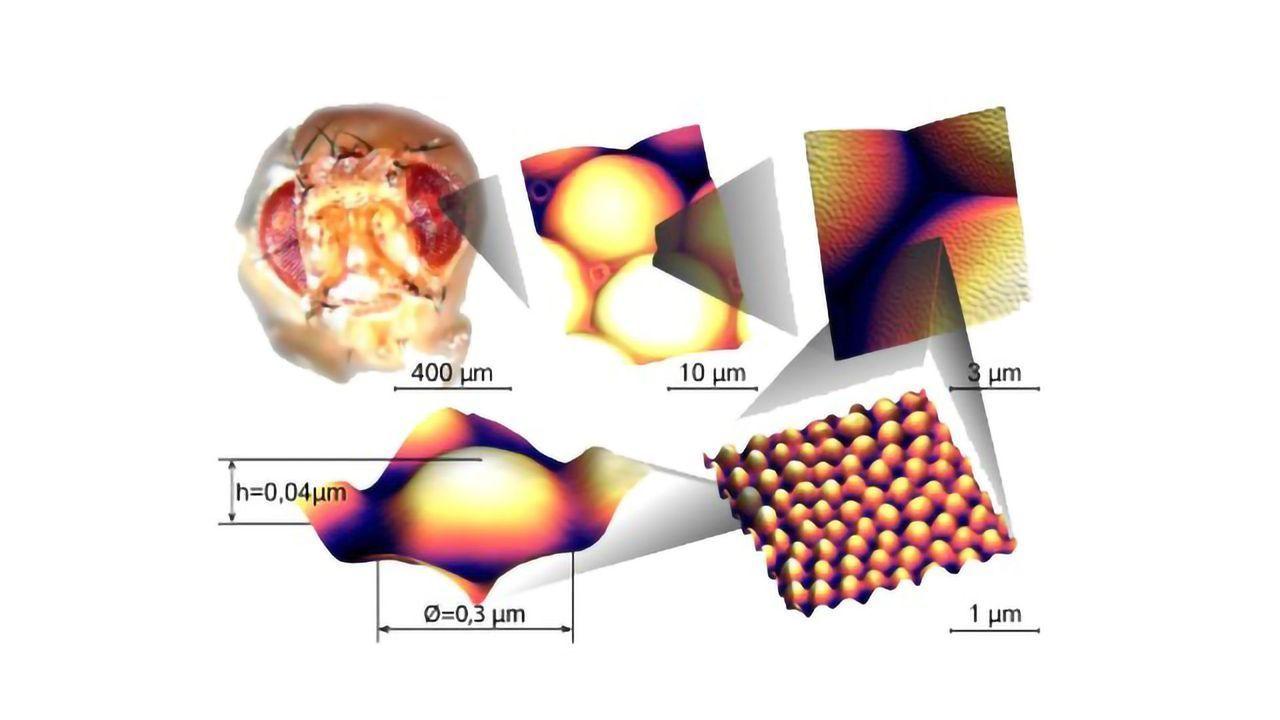 Nanoscale Reflective Coating Reverse-Engineered From Fly Eyes
