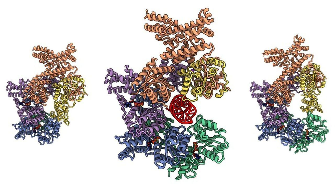 Imaging the ORC Complex Responsible for Genome Replication