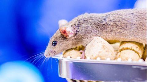 This Brain Area Can Reprogram Sensory Neurons to Enable Adaptive Behavior