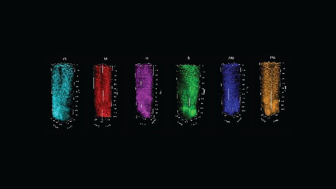 Live Imaging Method Links Functional Brain Maps to Structure