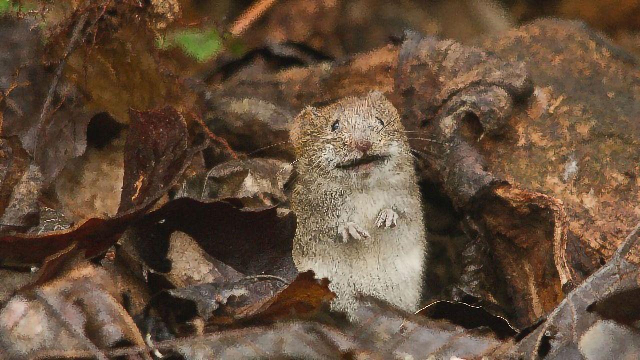 Segmentation Clock Progresses More Slowly in Humans Than Mice