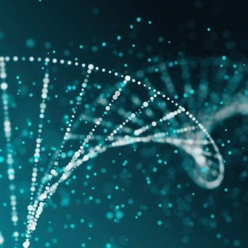 New Method Maps Contact Points Between Replicated DNA Molecules