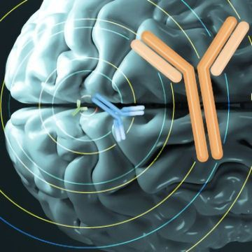 The Antibody Revolution in Neuroscience