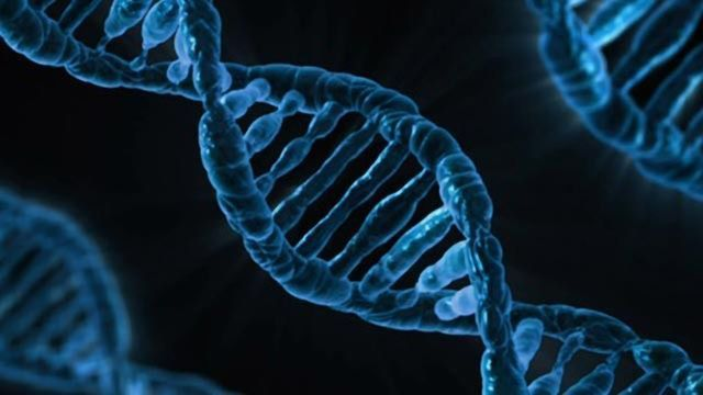 DNA Changes in the Bladder Provide Clues on How Cancer Develops