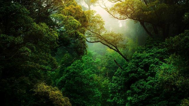 40% of the Amazon Rainforest Is at Tipping Point To Becoming Savanna |  Technology Networks
