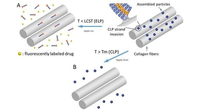Team Devises Tiny Cargo-Carrying Drug Systems