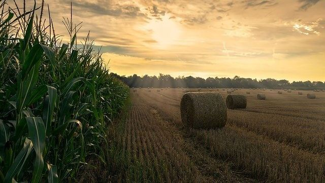 Examining the Nitrogen Tradeoff in Agriculture