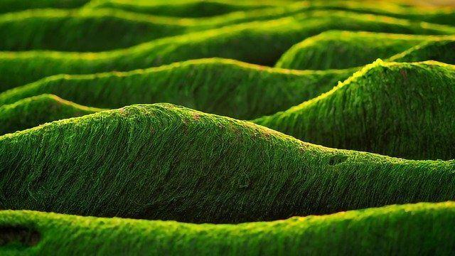 """Green"" Ethylene Production Using Artificial Cyanobacterial Biofilm"