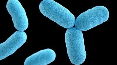 Protective Protein Shield for Bacteria in Times of Stress
