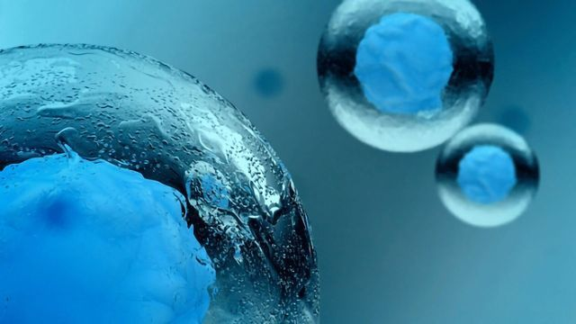 The Culture of Cell Culturing: Be Careful Not To Contaminate!