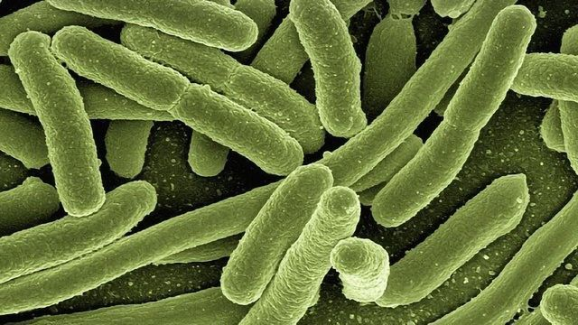 Healthcare and Agriculture Could Benefit from Bacterial Enzymes