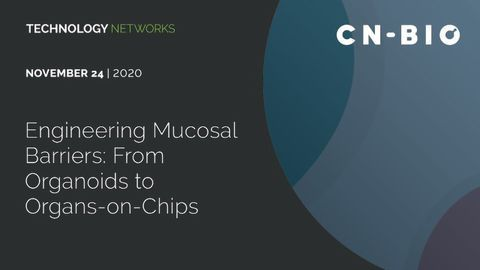 Engineering Mucosal Barriers: From Organoids to Organs-on-Chips
