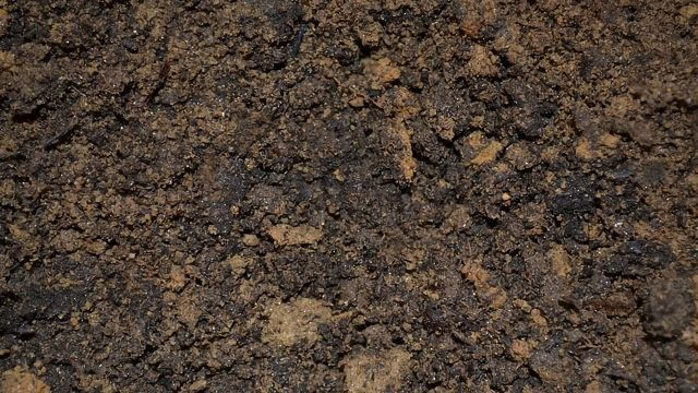 Bacterium Found in Soil Could Provide New Approach for Treating Alzheimer's