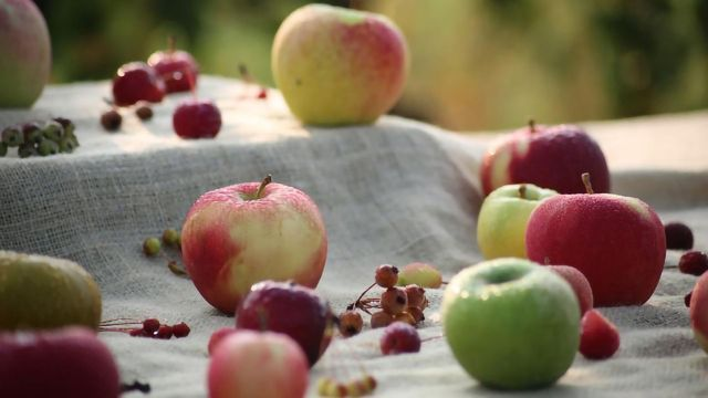 Scientists Assemble Full Genomes for Domesticated Apple and Two of Its Wild Progenitors